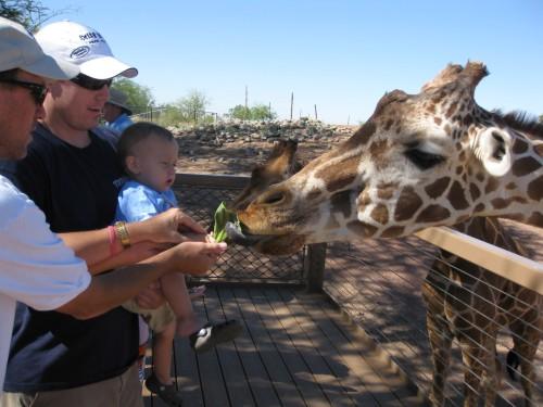 nephew feeding giraffe